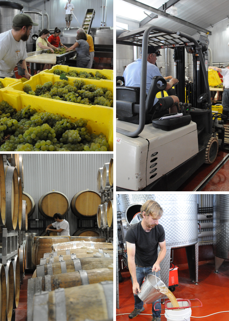 Working on the Grapes Winemaking