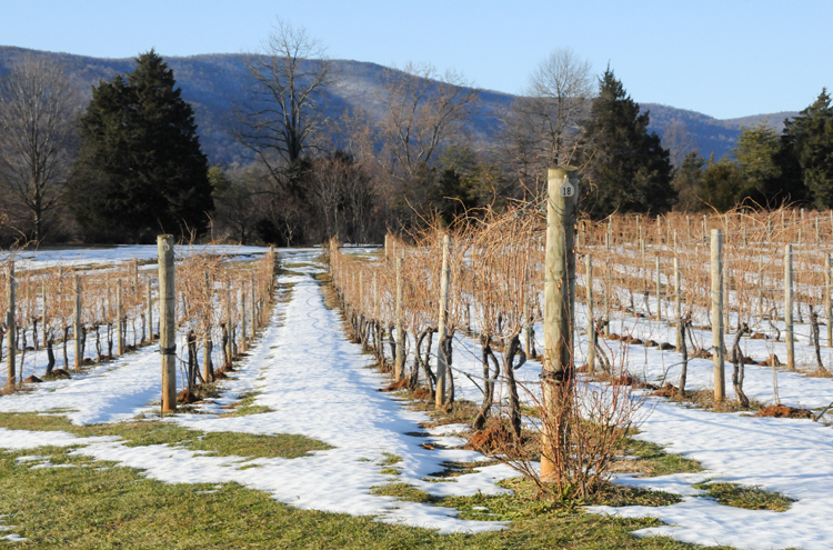 White Hall Vineyards Snow