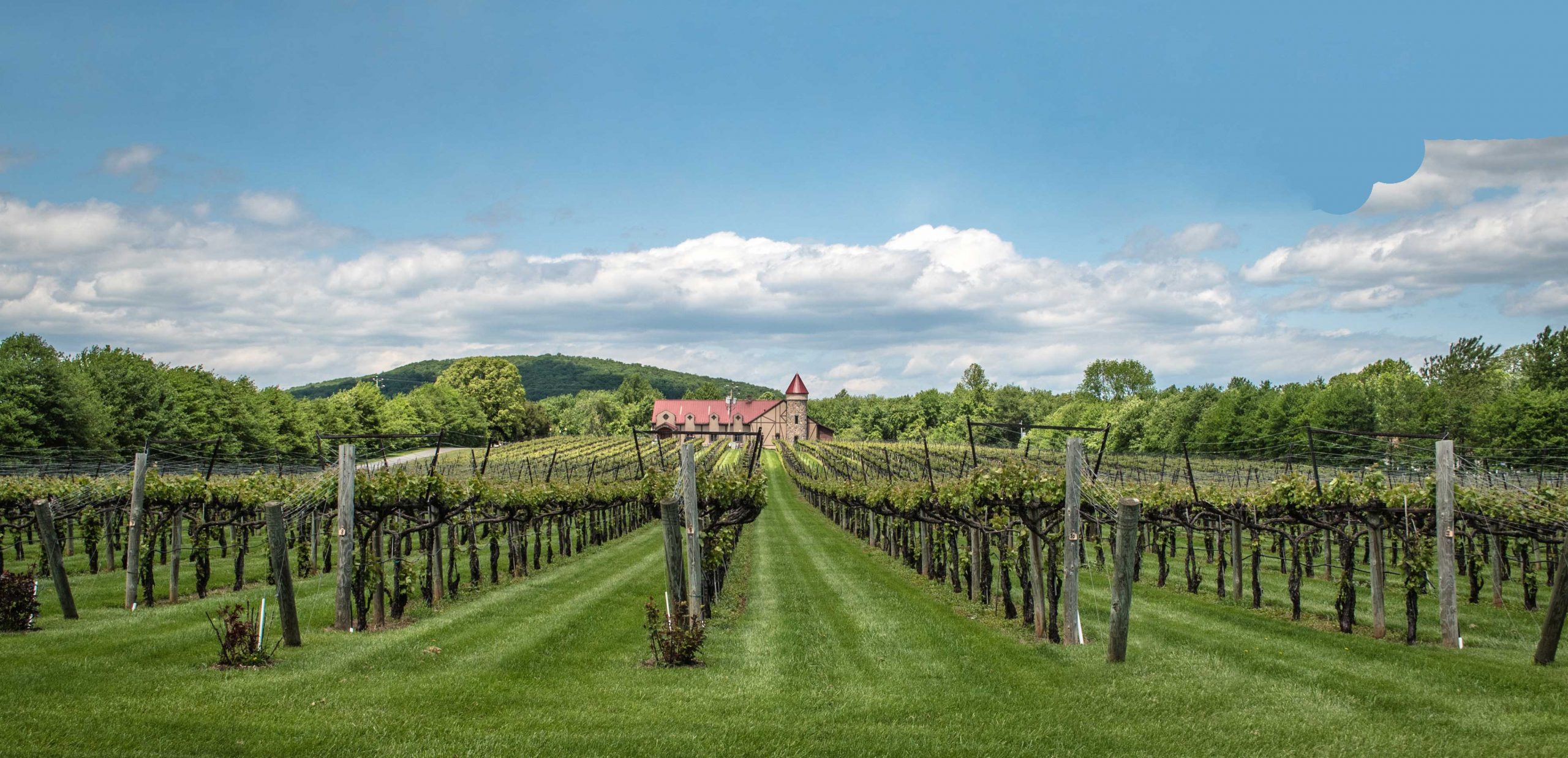 Horton Vineyards