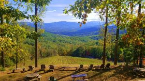 Ankida Ridge Vineyard views