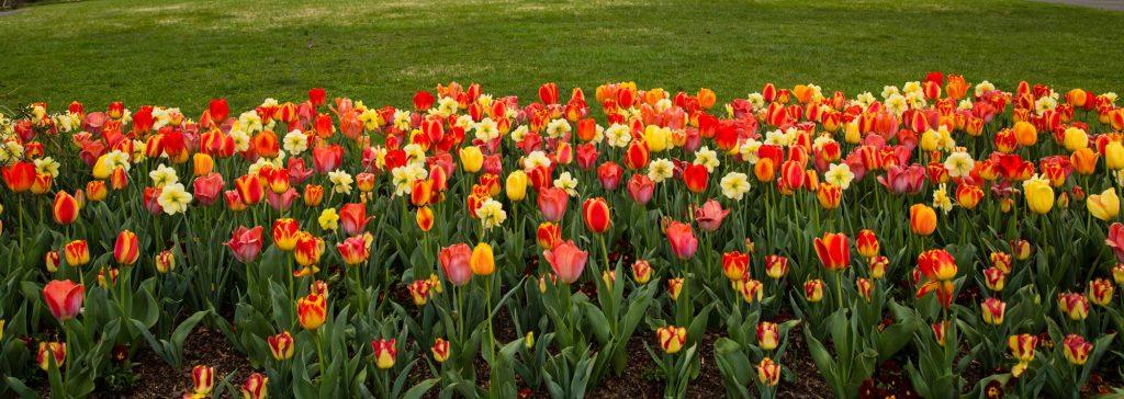 Historic Garden Week Fairfax VA
