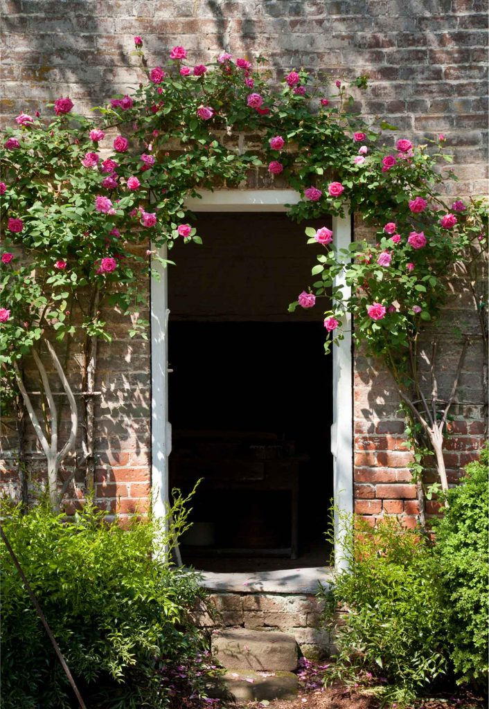 Historic Garden Week Climbing Roses