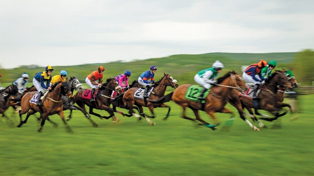 Gold cup horse race