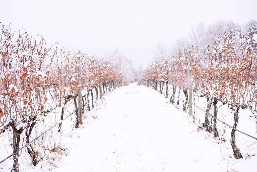 White Hall Vineyard