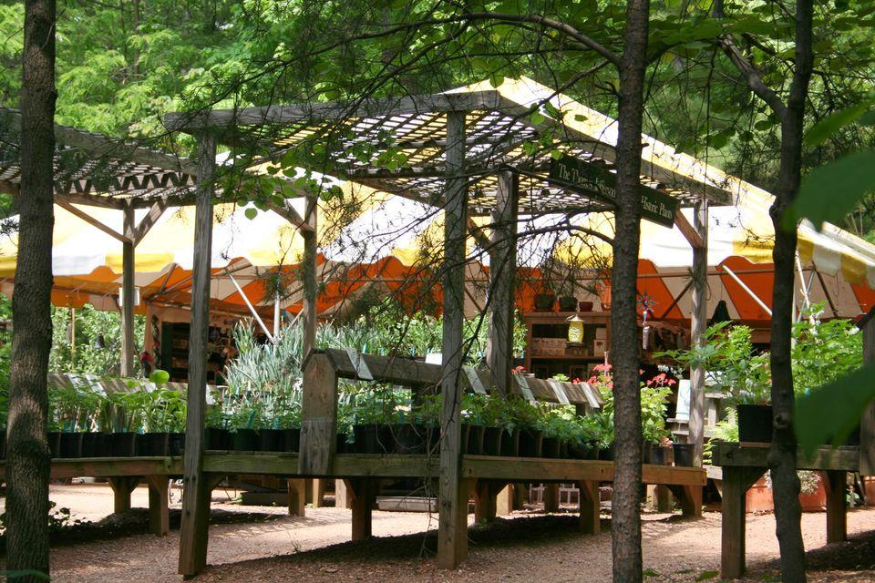Monticello Plant Sale