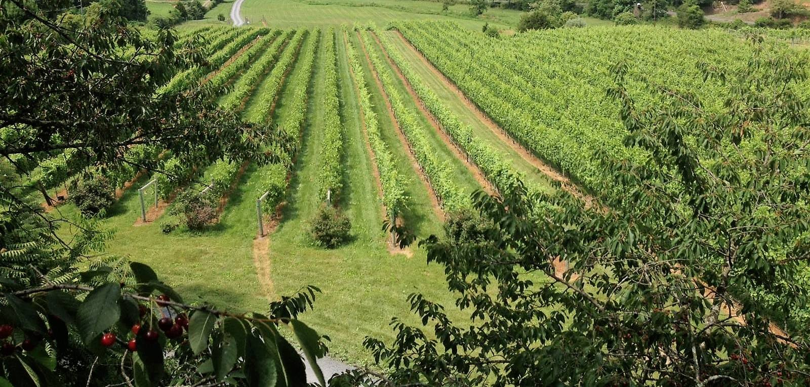 Shenandoah Valley Wine Trail