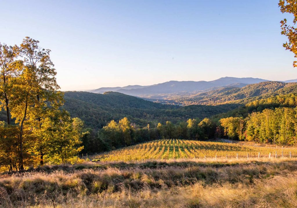 Views of the vineyard at Ankida Ridge Vineyards