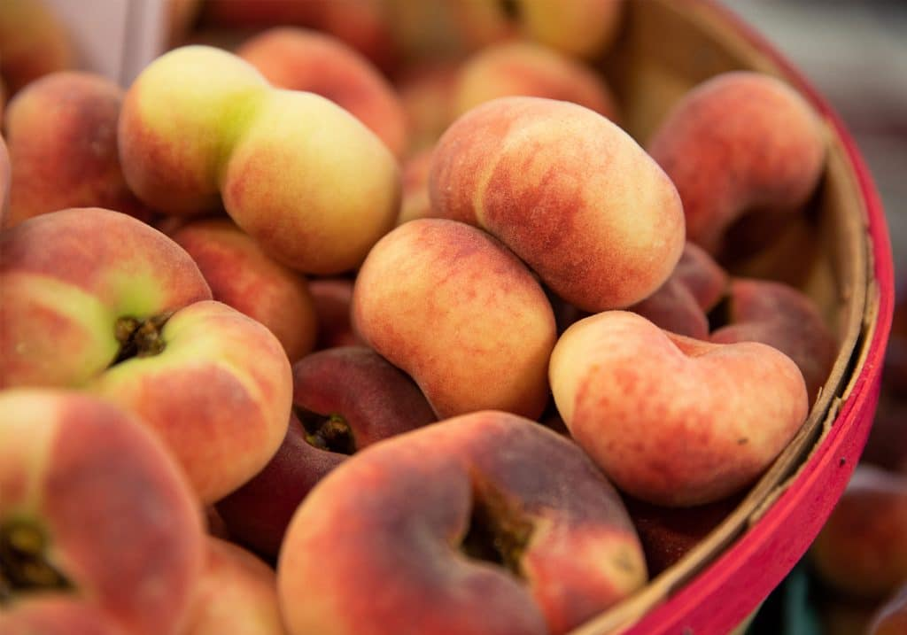 Pick-you-own peaches at Chiles Peach Orchard