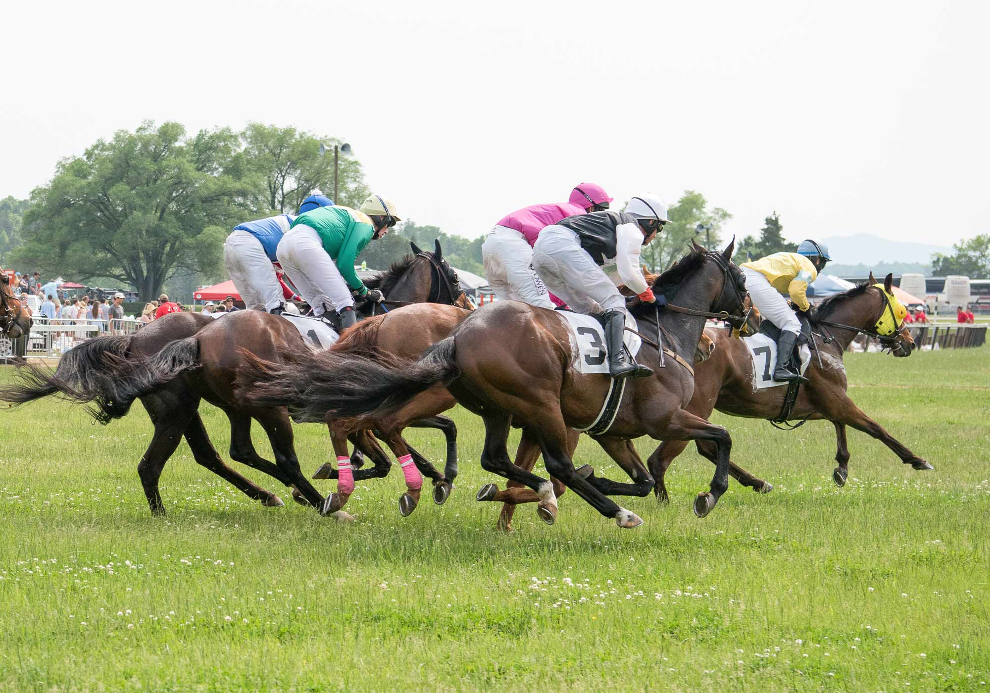 Virginia horse racing at Foxfield races