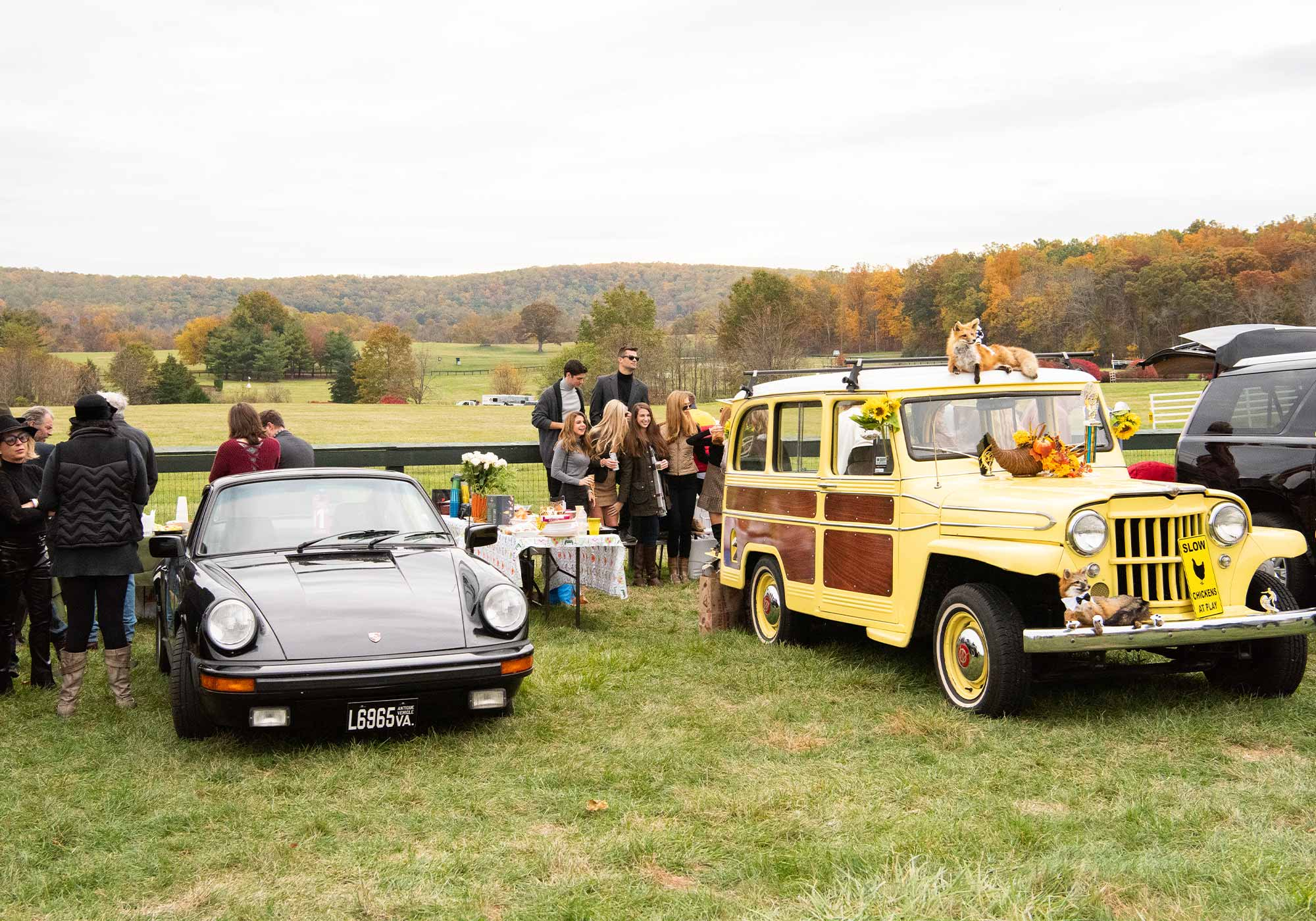 Virginia Gold Cup cars, Image: © Wine & Country Life
